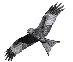 red kite sketch tattoo ideen pinterest red kite kites and