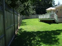 suggestions for trees along tall privacy fence pics