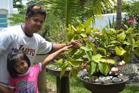 weng zaballa bonsai plants rock garden and my kids