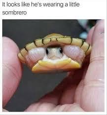 Turtle Memes - 15 hilarious turtle memes i can has cheezburger