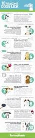 725 best pet care tips and tricks images on pinterest dogs pet