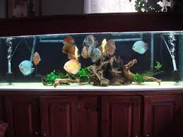 How To Aquascape A Planted Tank Beginner U0027s Guide To Discus The Planted Tank Forum