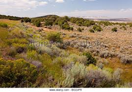 Wyoming vegetaion images Chaparral stock photos chaparral stock images alamy jpg