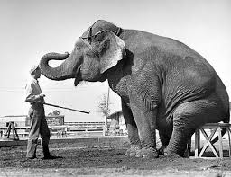 The Blind Men And The Elephant Analysis The Yorkshire Man Who Taught Houdini To Make An Elephant Disappear