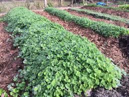 what u0027s in the garden carrboro community garden coalition