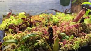 sphagnum moss care and culture tips to grow beautiful sphagnum