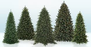special tree categories tree market