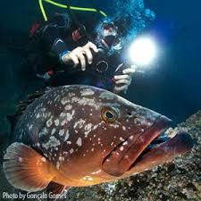 sea dragon 2500 photo video dive light amazon com sealife sl671 sea dragon 2500 uw photo video dive light