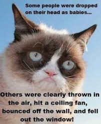 Unamused Cat Meme - 50 shades of grumpy cat chapter 135 as ns a better class of