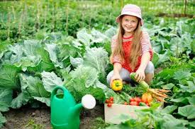 ideas for starting a vegetable garden on the cheap