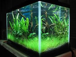 10 gallon planted tank led lighting 10 gallon aquarium planted google search 10 gallon aquarium