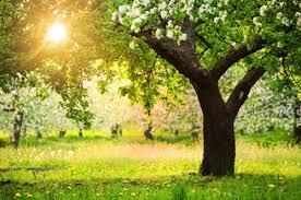 albero giardino arboricoltore certificato 礙 lui l esperto degli alberi fiori e
