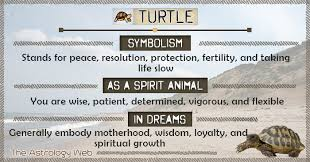 turtle meaning and symbolism the astrology web