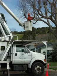 pwa fe tree services tree services city of oakland california