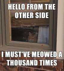 Hello Meme Funny - 25 funny cat memes sayingimages com