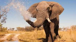 botswana holidays natural world safaris