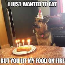 Happy Birthday Dog Meme - birthday funny dog meme funny best of the funny meme