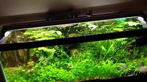 10 gallon planted tank led lighting new finnex fugeray planted plus led light youtube