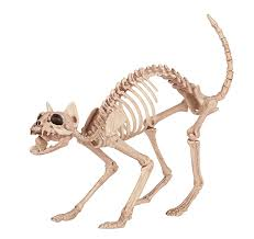 Halloween Posable Skeleton Amazon Com Crazy Bonez Skeleton Cat Toys U0026 Games
