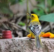 bird feeding tips tropical audubon society