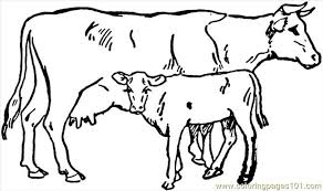 mammals coloring pages cow 4 coloring page free cow coloring pages coloringpages101 com