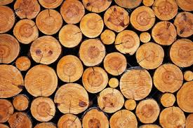 wood log background log clipart explore pictures