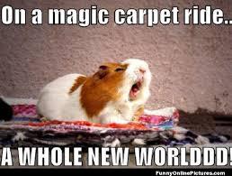 singing hamster meme picture