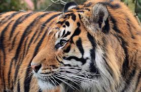 top 5 things to do at zsl london zoo time out kids