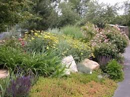 xeriscape introduction