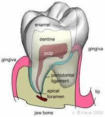 Business Letter Quizlet Dental Assisting Terminology Flashcards Quizlet Dental