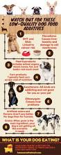 what is the right choice for your healthy dog organic dog food
