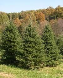 trees gaver farm llc