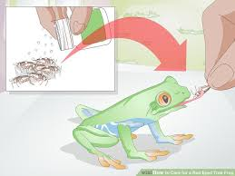 3 ways to care for a eyed tree frog wikihow