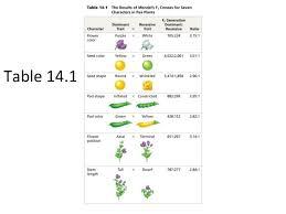 inheritance pattern quizlet mendel s laws of inheritance bio 201 flashcards quizlet