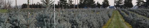 air pot stock premier trees