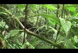 jungle forest animations clips gifs