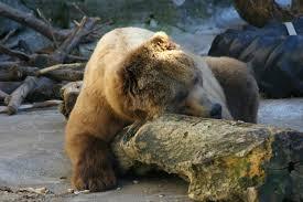 10 eye opening facts about hibernation mental floss
