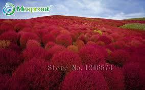 aliexpress buy grass seeds perennial 500pcs grass burning