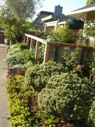 Small Shrubs For Front Yard - edible front yard edible landscaping made easy with avis licht