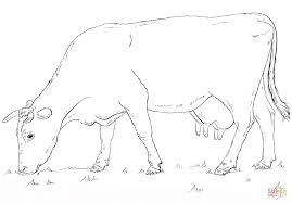 grazing cow coloring page free printable coloring pages