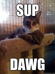 Cool Cat Meme - sup dawg cool cat quickmeme