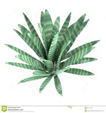 3d render of desert plant stock illustration image 39774073