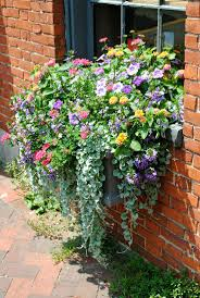 Beautiful Window Boxes Flowers For Window Boxes In Partial Shade Jazz Up Your Home Nanas
