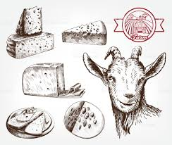 head of a goat goat cheese set of sketches on a gray stock vector