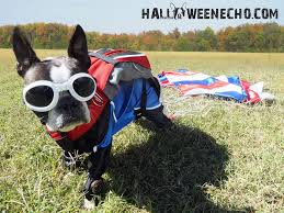 Halloween Costume Ideas For Pets Skydiver Costume Of Echo The Boston Terrier Dog Halloween