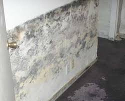 What To Put On Basement Floor by Basement Mold Health Risks And Mold Prevention Tips
