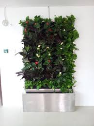 indoor vertical garden for office in the strand lush eco