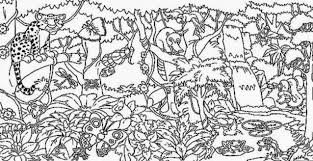 free coloring page of the rainforest tropical rainforest coloring pages rainforest coloring pictures free