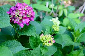 washington native plants washington dc real estate news