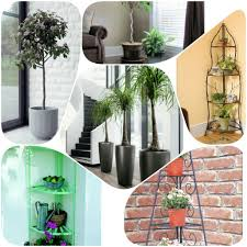 Best Plants For Living Room Livingroom House Plants Best House Plants Tropical Indoor Plants